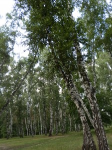 К чему снится сон о лесной чаще?